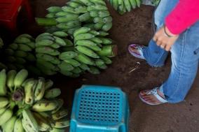 The Banana Girl